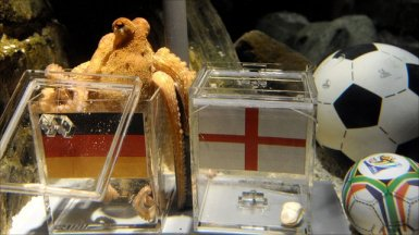 St. Paul The Octopus of Scotland